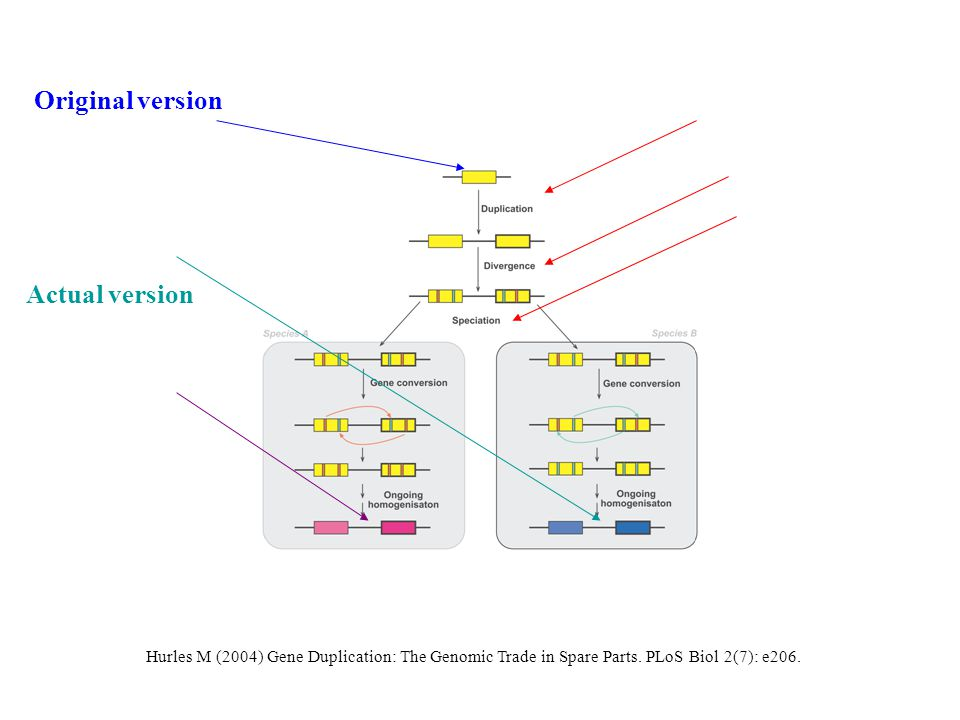 Hurles M (2004) Gene Duplication: The Genomic Trade in Spare Parts.