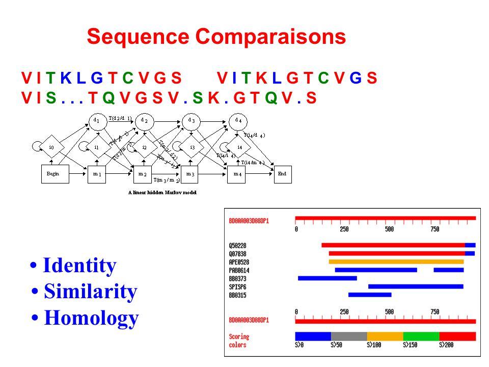 Sequence Comparaisons V I T K L G T C V G SV I T K L G T C V G S V I S...