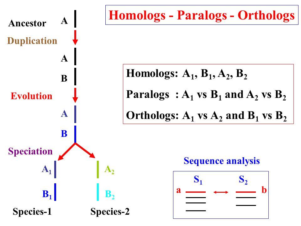 Homologs - Paralogs - Orthologs Homologs: A 1, B 1, A 2, B 2 Paralogs : A 1 vs B 1 and A 2 vs B 2 Orthologs: A 1 vs A 2 and B 1 vs B 2 S1S1 S2S2 ab Sequence analysis Species-1Species-2 Duplication Ancestor Evolution Speciation A1A1 A2A2 B1B1 B2B2 A B A B A