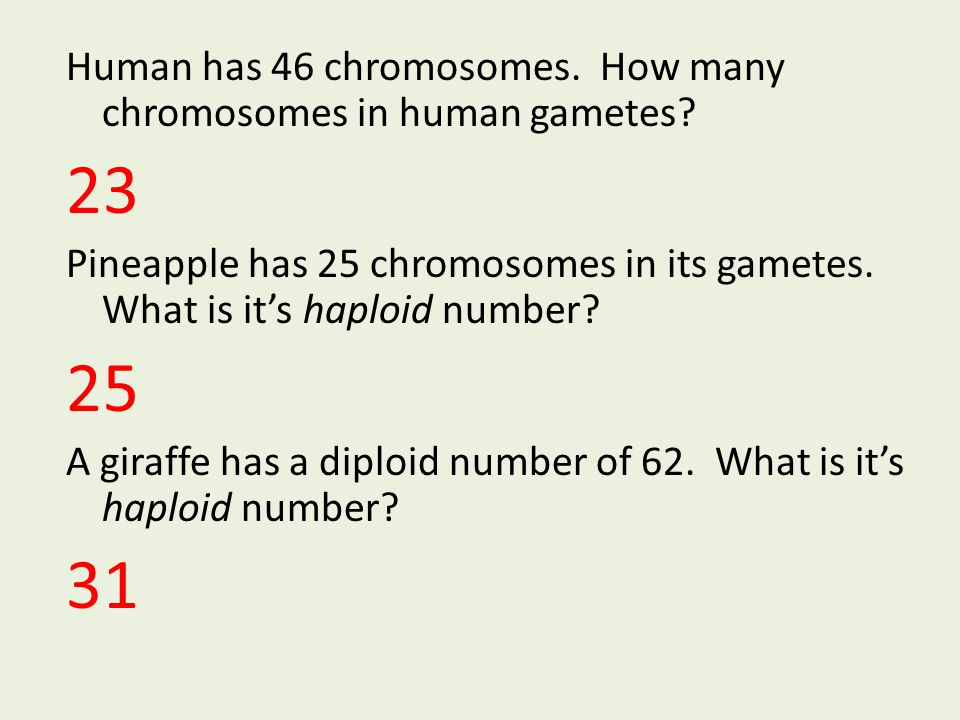 Human has 46 chromosomes. How many chromosomes in human gametes? 23 Pineapple has 25 chromosomes in its gametes. What is it's haploid number? 25 A gir