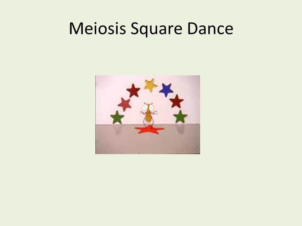 Meiosis Square Dance