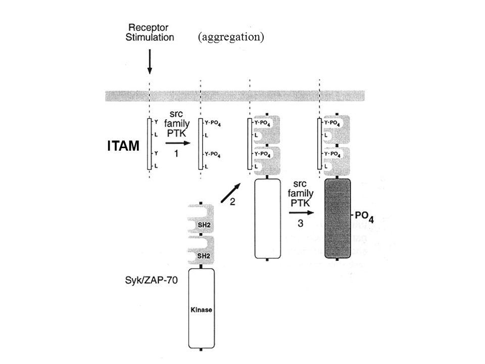 ITAM (aggregation)