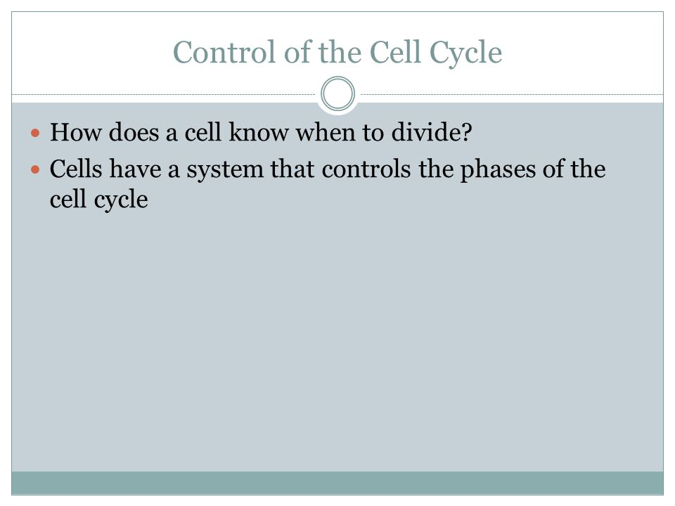 Control of the Cell Cycle How does a cell know when to divide? Cells have a system that controls the phases of the cell cycle