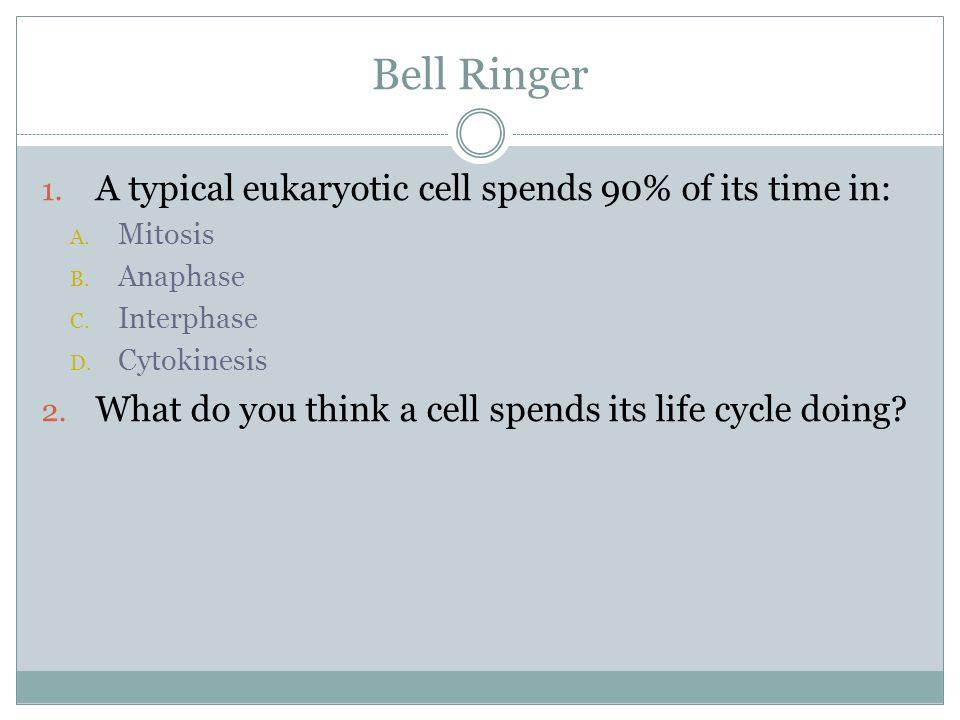 Bell Ringer 1. A typical eukaryotic cell spends 90% of its time in: A. Mitosis B. Anaphase C. Interphase D. Cytokinesis 2. What do you think a cell sp