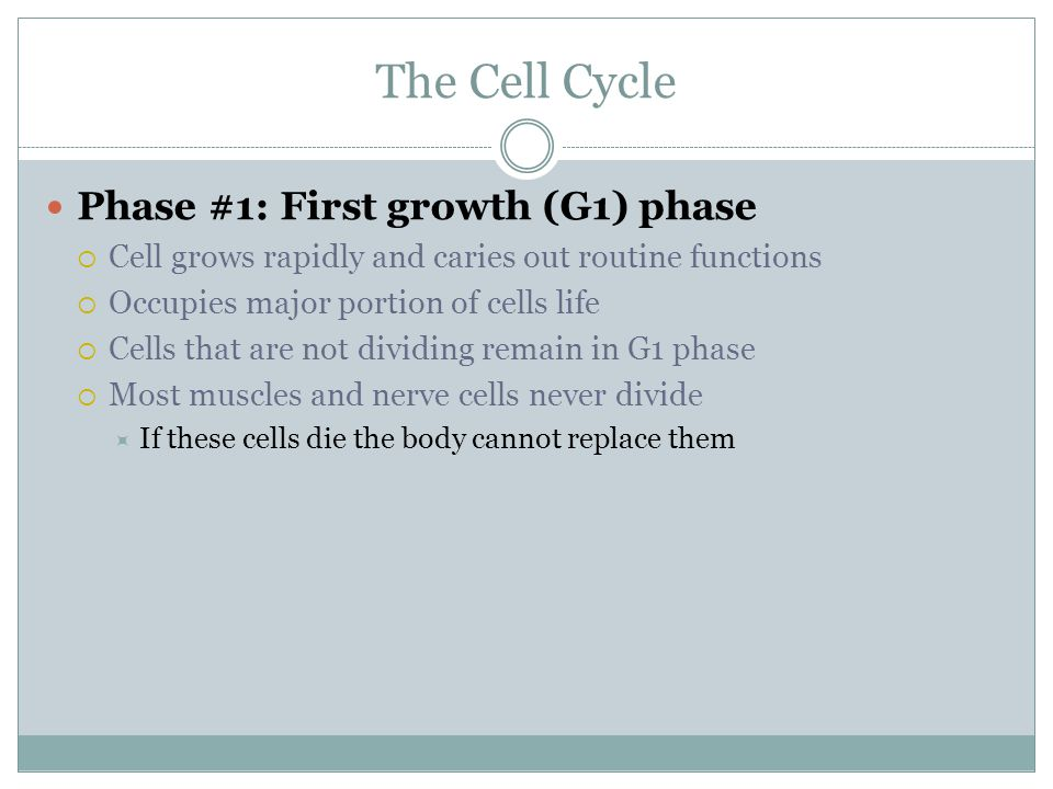 The Cell Cycle Phase #1: First growth (G1) phase  Cell grows rapidly and caries out routine functions  Occupies major portion of cells life  Cells