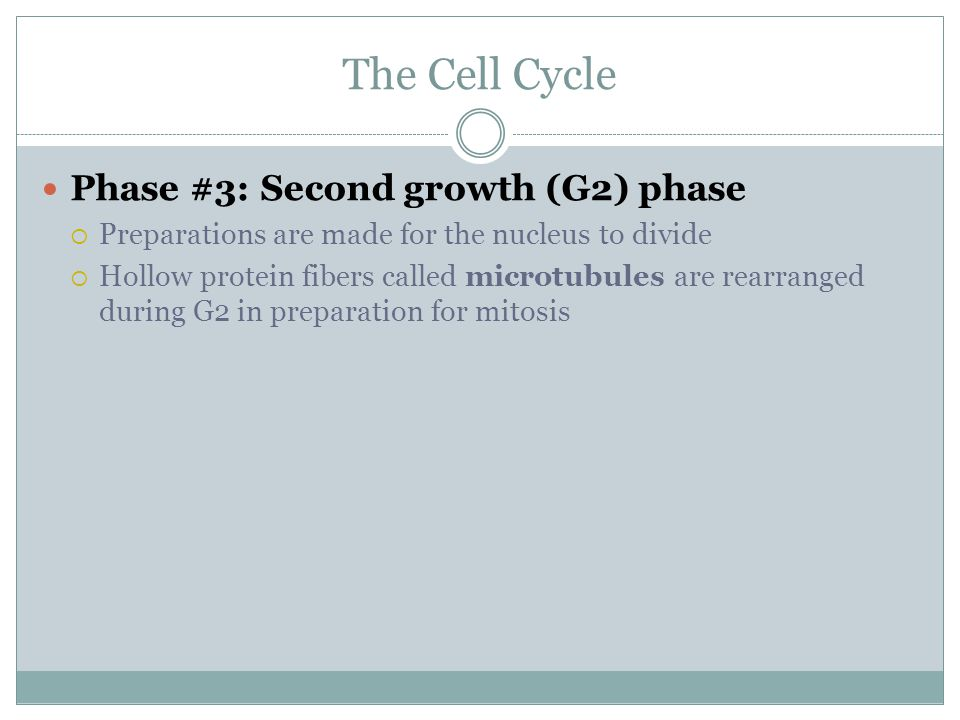 The Cell Cycle Phase #3: Second growth (G2) phase  Preparations are made for the nucleus to divide  Hollow protein fibers called microtubules are re
