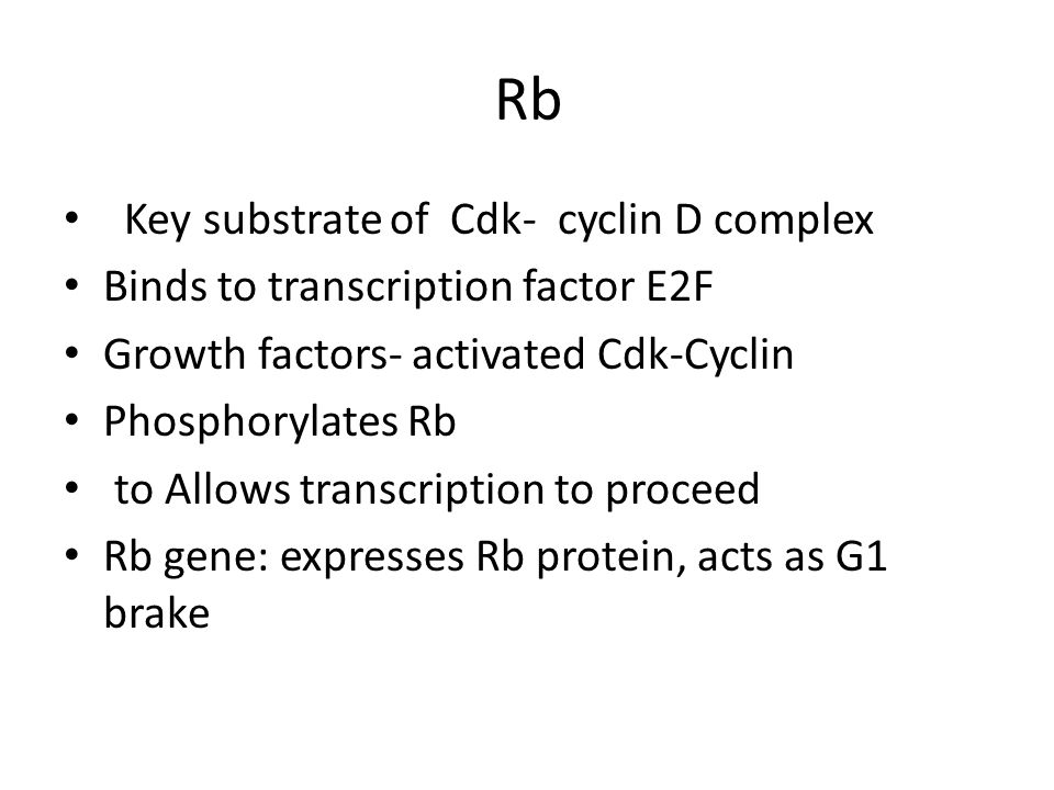 Rb Key substrate of Cdk- cyclin D complex Binds to transcription factor E2F Growth factors- activated Cdk-Cyclin Phosphorylates Rb to Allows transcription to proceed Rb gene: expresses Rb protein, acts as G1 brake