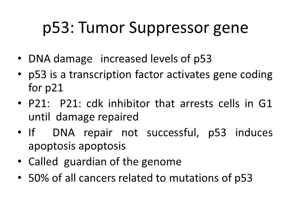 p53: Tumor Suppressor gene DNA damage increased levels of p53 p53 is a transcription factor activates gene coding for p21 P21: P21: cdk inhibitor that arrests cells in G1 until damage repaired If DNA repair not successful, p53 induces apoptosis apoptosis Called guardian of the genome 50% of all cancers related to mutations of p53