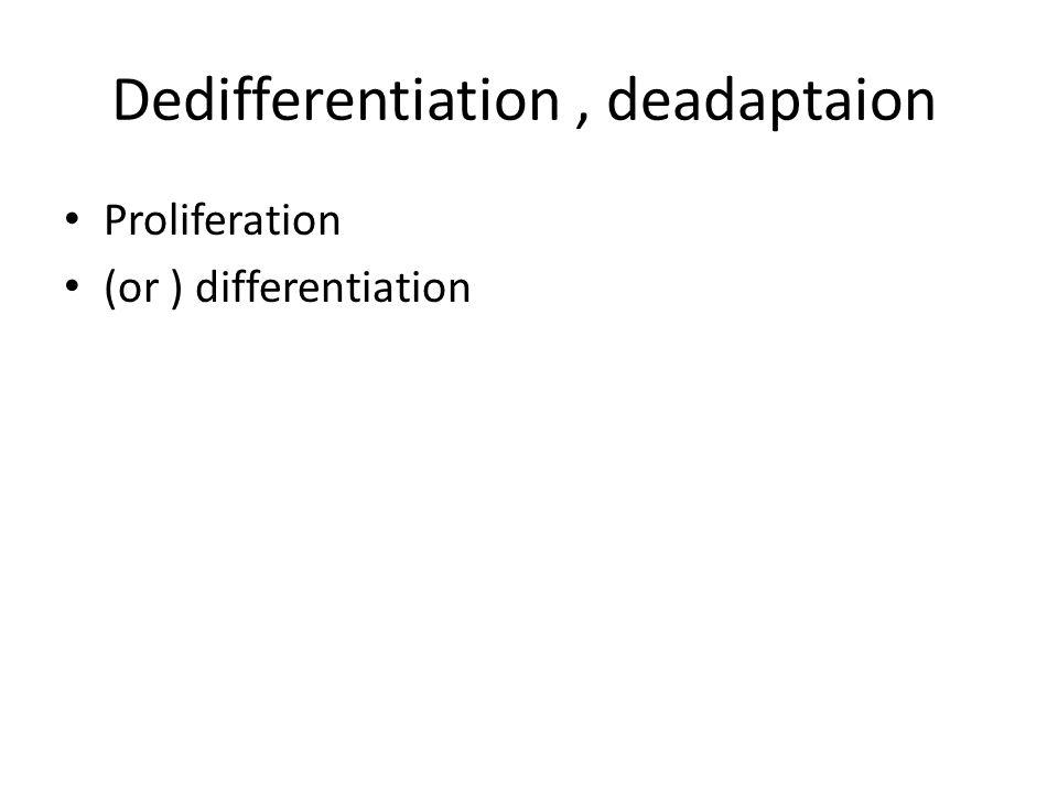 Dedifferentiation, deadaptaion Proliferation (or ) differentiation