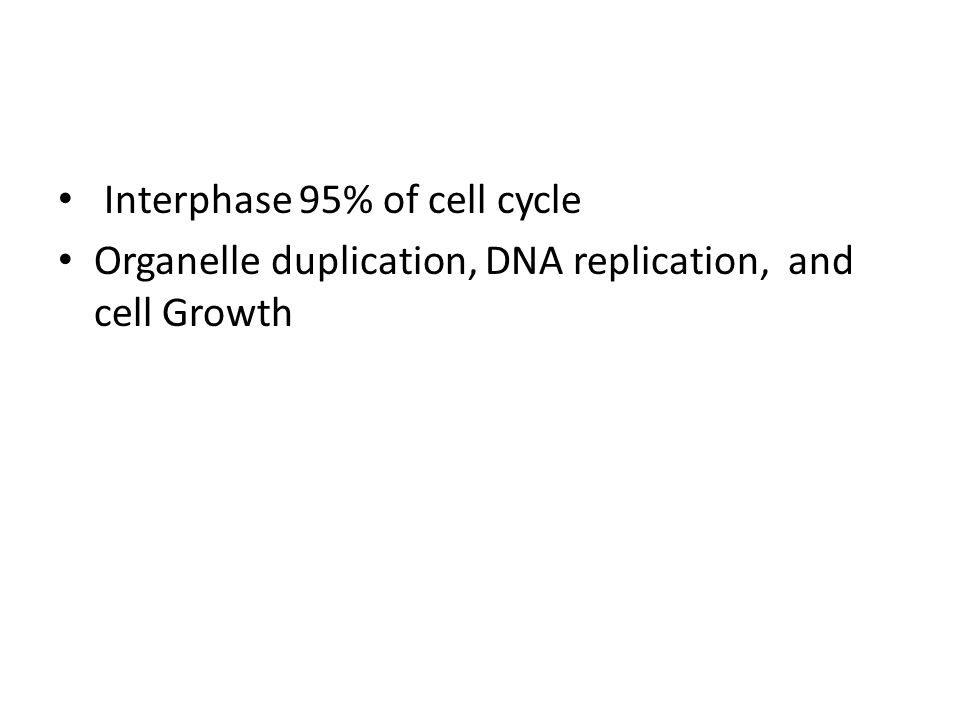 Interphase 95% of cell cycle Organelle duplication, DNA replication, and cell Growth