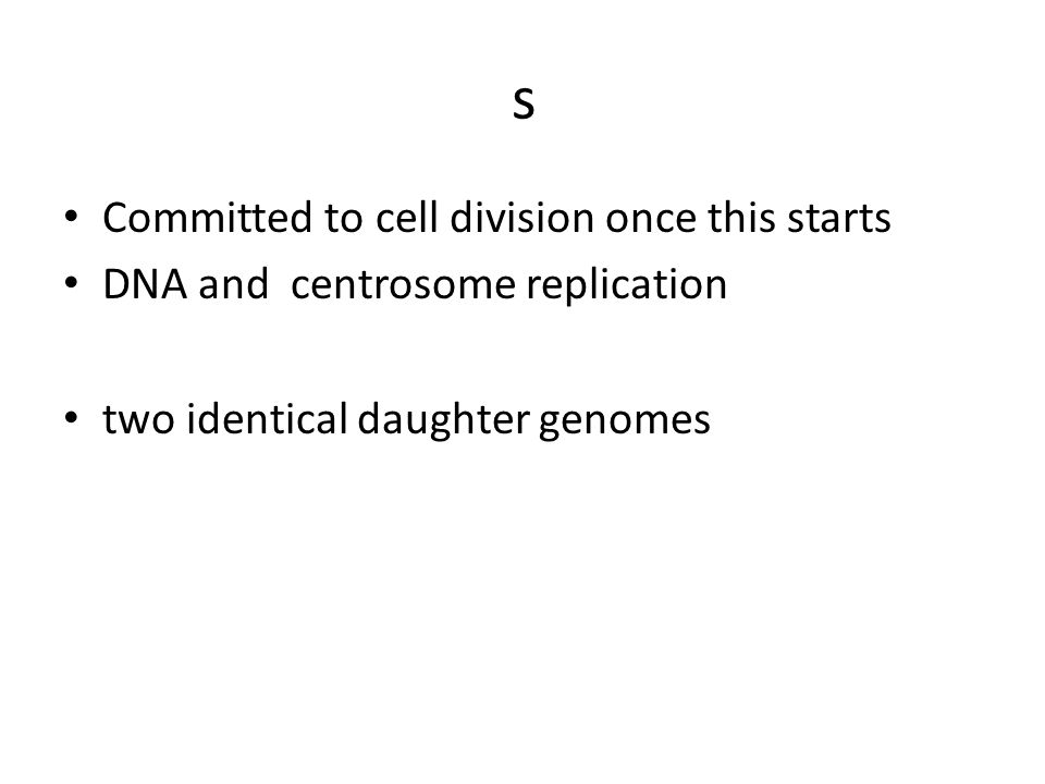 s Committed to cell division once this starts DNA and centrosome replication two identical daughter genomes