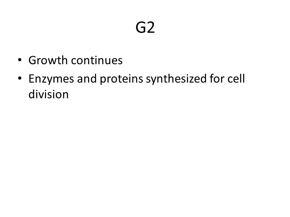 G2 Growth continues Enzymes and proteins synthesized for cell division