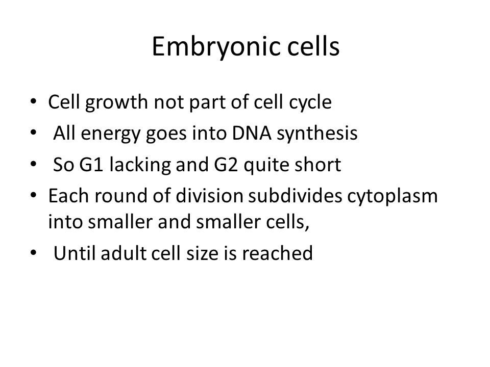 Embryonic cells Cell growth not part of cell cycle All energy goes into DNA synthesis So G1 lacking and G2 quite short Each round of division subdivides cytoplasm into smaller and smaller cells, Until adult cell size is reached