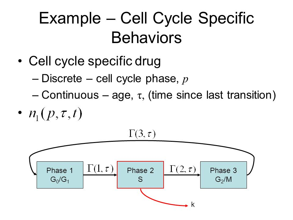 Example – Cell Cycle Specific Behaviors Cell cycle specific drug –Discrete – cell cycle phase, p –Continuous – age, τ, (time since last transition) Phase 1 G 0 /G 1 Phase 2 S Phase 3 G 2 /M k