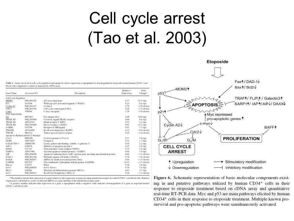 Cell cycle arrest (Tao et al. 2003)