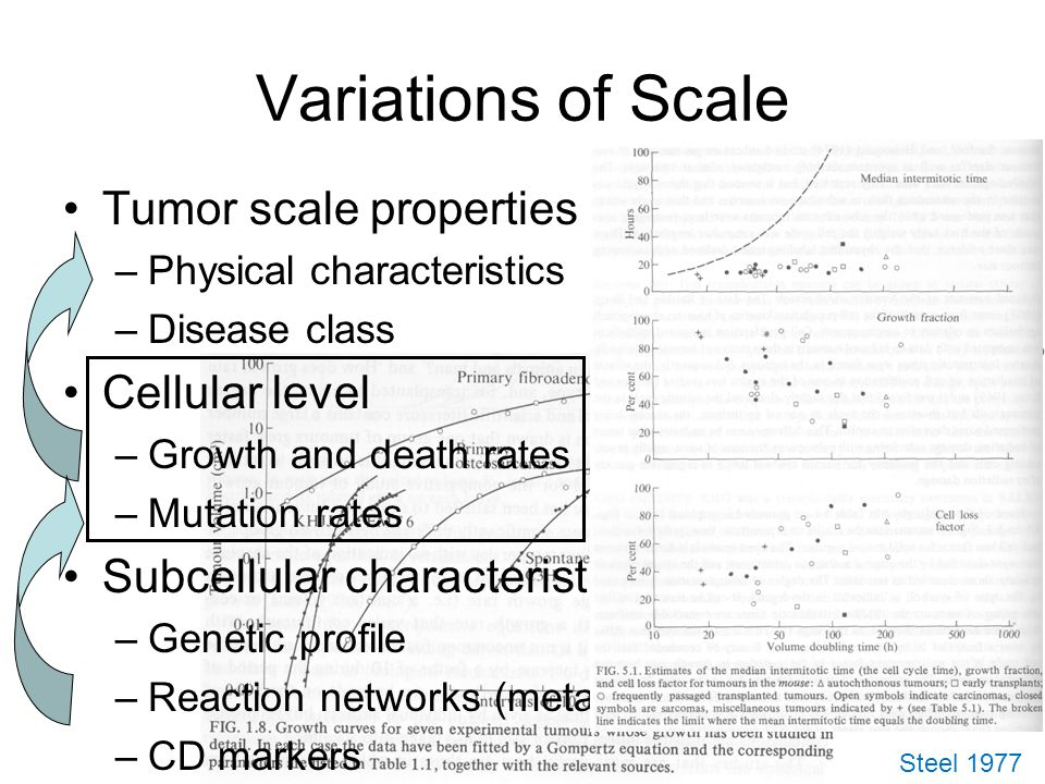 Variations of Scale Tumor scale properties –Physical characteristics –Disease class Cellular level –Growth and death rates –Mutation rates Subcellular characteristics –Genetic profile –Reaction networks (metabol- and prote-omics) –CD markers M.-F.