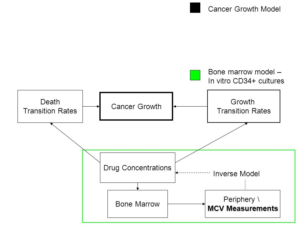 Growth Transition Rates Death Transition Rates Cancer Growth Bone marrow model – In vitro CD34+ cultures Inverse Model Drug Concentrations Bone Marrow Periphery \ MCV Measurements Cancer Growth Model