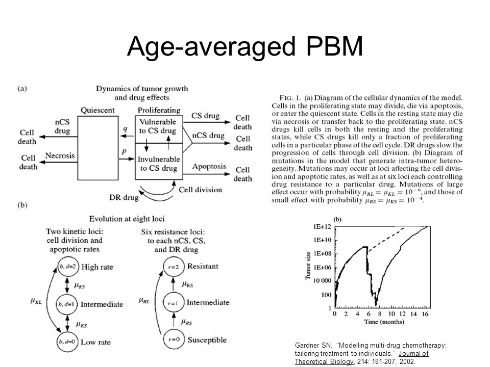 """Age-averaged PBM Gardner SN. """"Modelling multi-drug chemotherapy: tailoring treatment to individuals."""" Journal of Theoretical Biology, 214: 181-207, 20"""