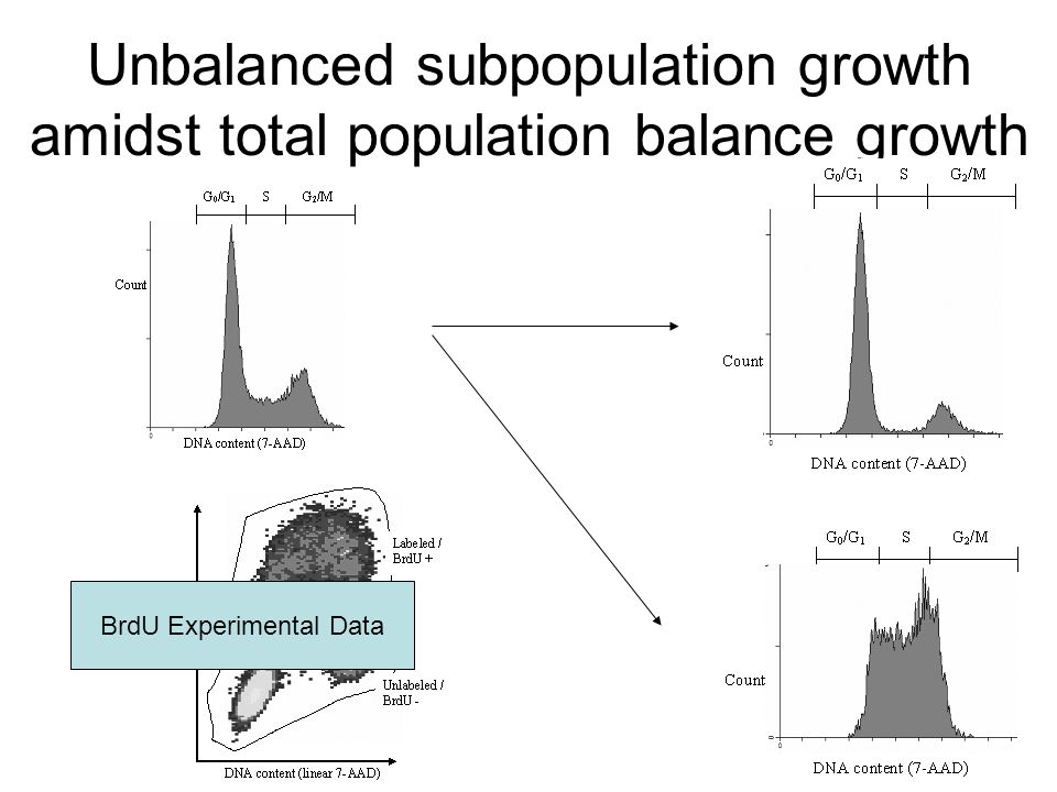 Unbalanced subpopulation growth amidst total population balance growth BrdU Experimental Data