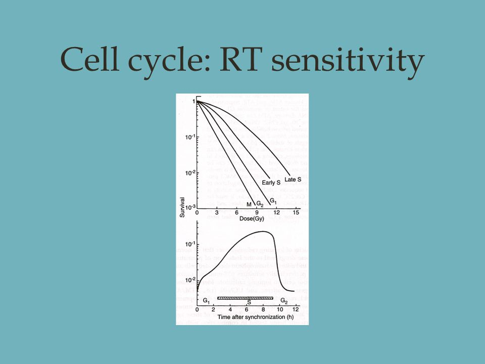 Cell cycle: RT sensitivity