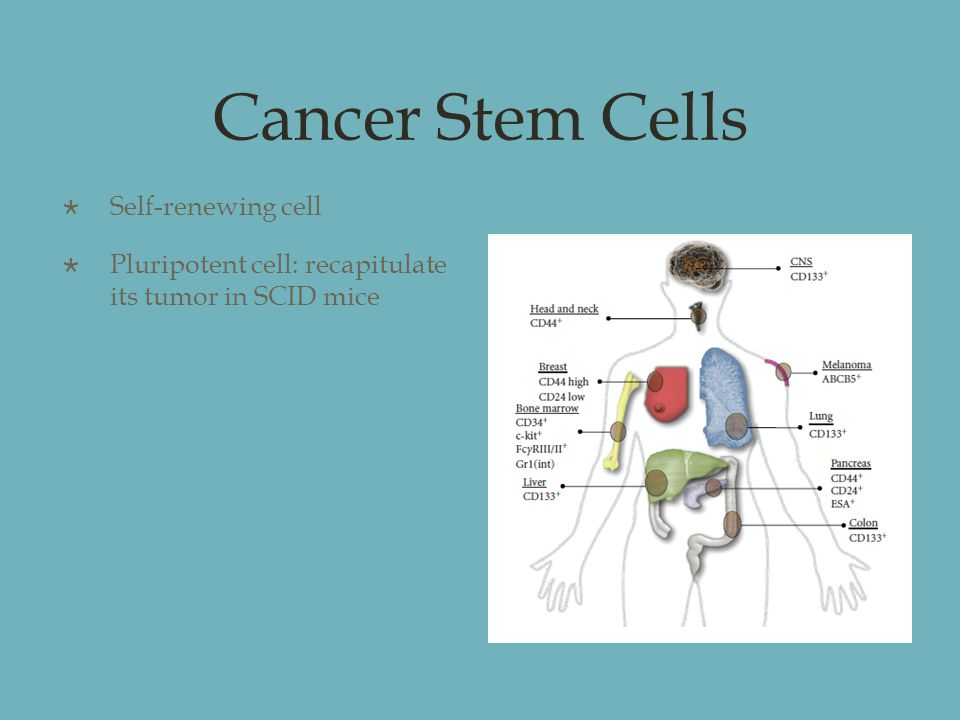 Cancer Stem Cells  Self-renewing cell  Pluripotent cell: recapitulate its tumor in SCID mice