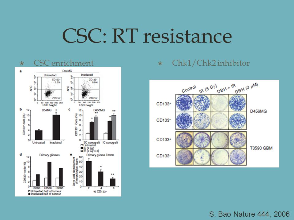 CSC: RT resistance  CSC enrichment  Chk1/Chk2 inhibitor S. Bao Nature 444, 2006