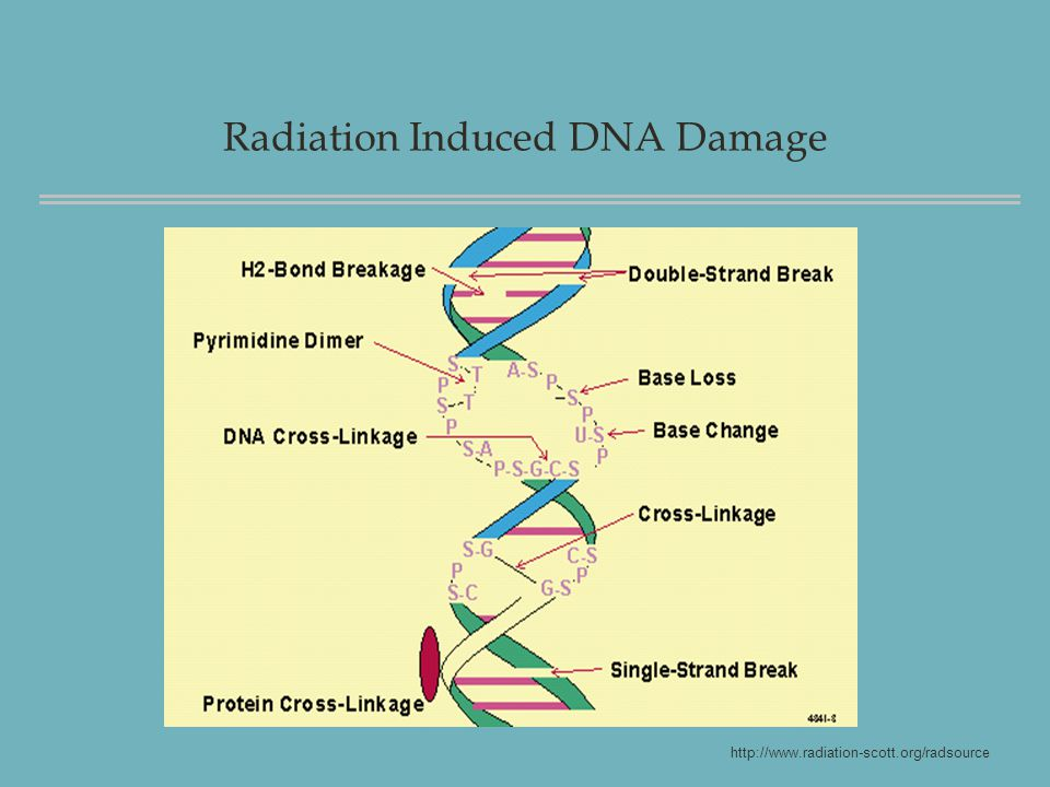 Radiation Induced DNA Damage http://www.radiation-scott.org/radsource