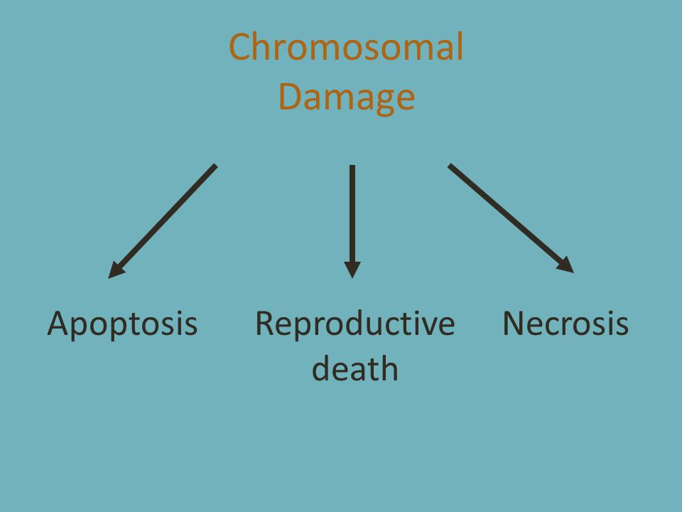 Chromosomal Damage ApoptosisReproductive death Necrosis