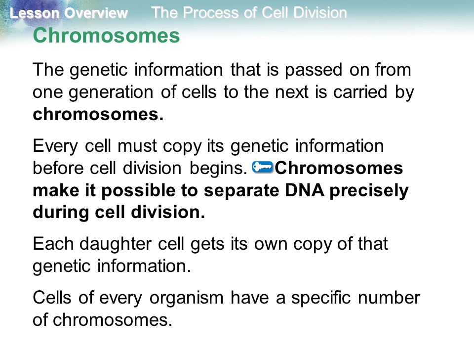 Lesson Overview Lesson Overview The Process of Cell Division Prophase Duplicated chromosomes inside the nucleus condense and become visible.