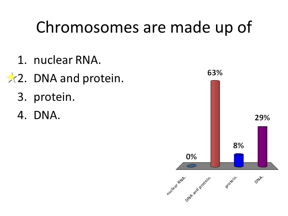 Chromosomes are made up of 1.nuclear RNA. 2.DNA and protein. 3.protein. 4.DNA.