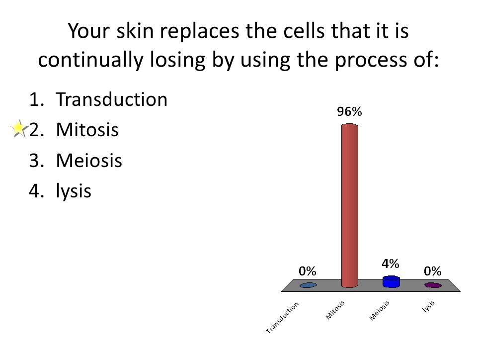 Your skin replaces the cells that it is continually losing by using the process of: 1.Transduction 2.Mitosis 3.Meiosis 4.lysis