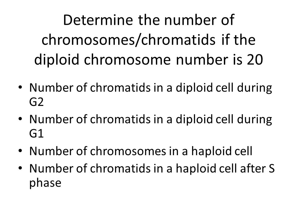 Number of chromatids in a haploid cell after mitosis Number of chromosomes in a diploid cell after mitosis.