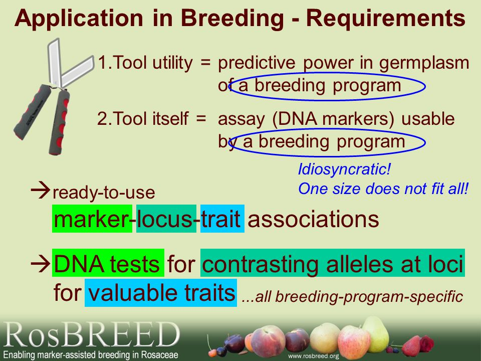 1.Tool utility =predictive power in germplasm of a breeding program Application in Breeding - Requirements 2.Tool itself =assay (DNA markers) usable b