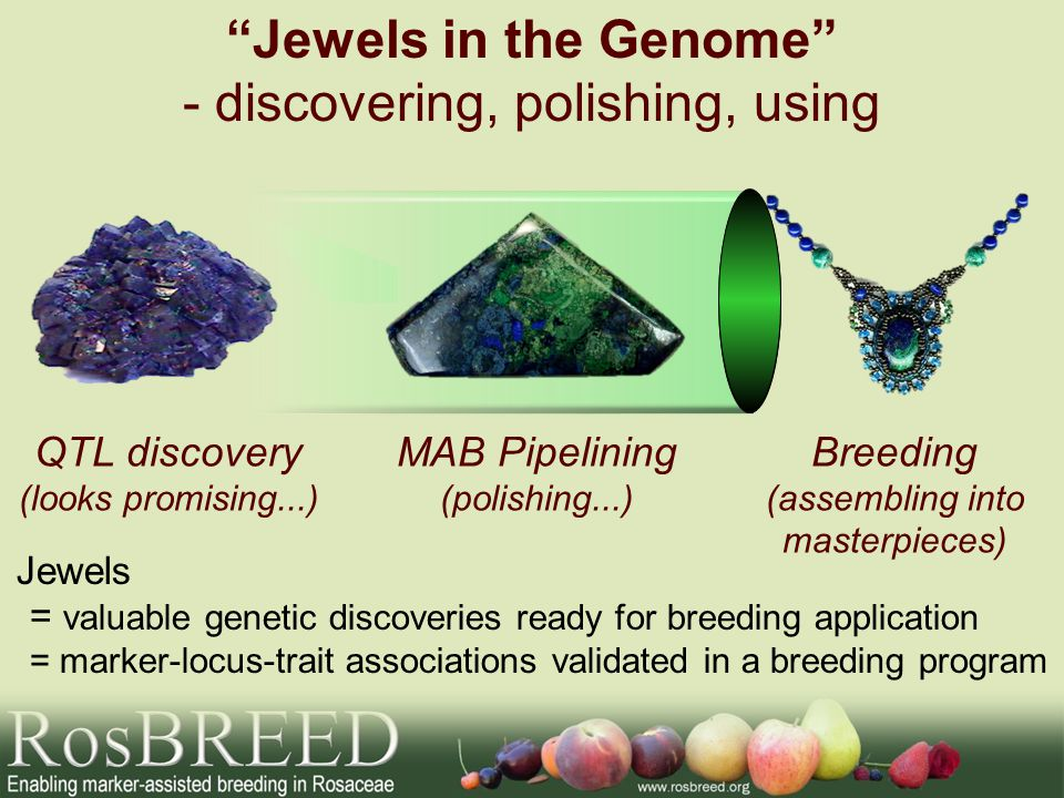 Application of Genomics Knowledge Known QTLs DNA information Linkage maps Expression profiles Whole genome sequences Genetic/ allelic diversity GMO Application in current cultivars Application in breeding Find trait- controlling genes Application