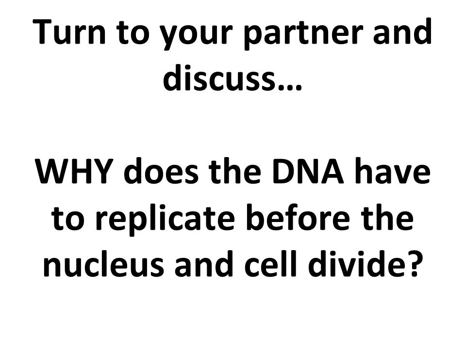 Turn to your partner and discuss… WHY does the DNA have to replicate before the nucleus and cell divide