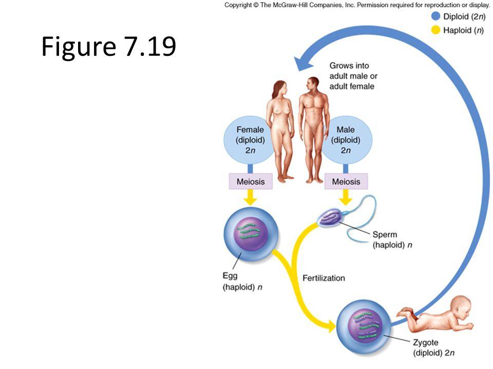 Figure 7.19