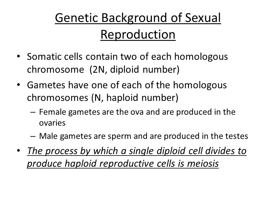 Genetic Background of Sexual Reproduction Somatic cells contain two of each homologous chromosome (2N, diploid number) Gametes have one of each of the homologous chromosomes (N, haploid number) – Female gametes are the ova and are produced in the ovaries – Male gametes are sperm and are produced in the testes The process by which a single diploid cell divides to produce haploid reproductive cells is meiosis