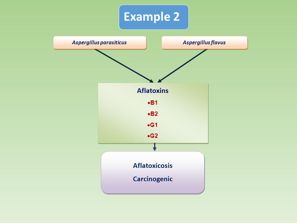 Aflatoxins  B1  B2  G1  G2 Aflatoxins  B1  B2  G1  G2 Aspergillus flavus Aspergillus parasiticus Aflatoxicosis Carcinogenic Aflatoxicosis Carc