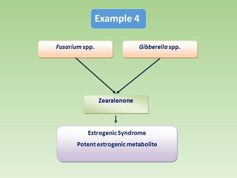 Estrogenic Syndrome Potent estrogenic metabolite Estrogenic Syndrome Potent estrogenic metabolite Zearalenone Gibberella spp.