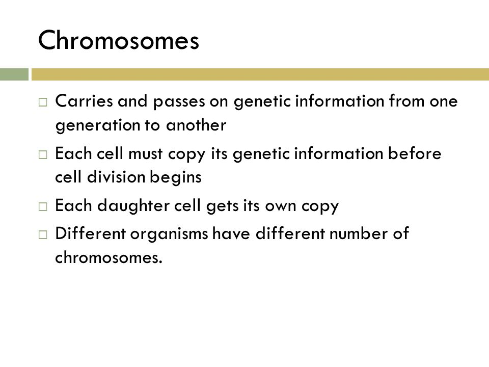 Chromosomes  Carries and passes on genetic information from one generation to another  Each cell must copy its genetic information before cell divis