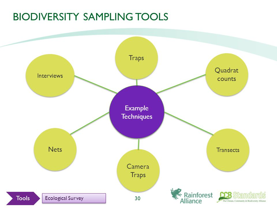 BIODIVERSITY SAMPLING TOOLS 30 Example Techniques Interviews Nets Traps Camera Traps Transects Quadrat counts Tools Ecological Survey