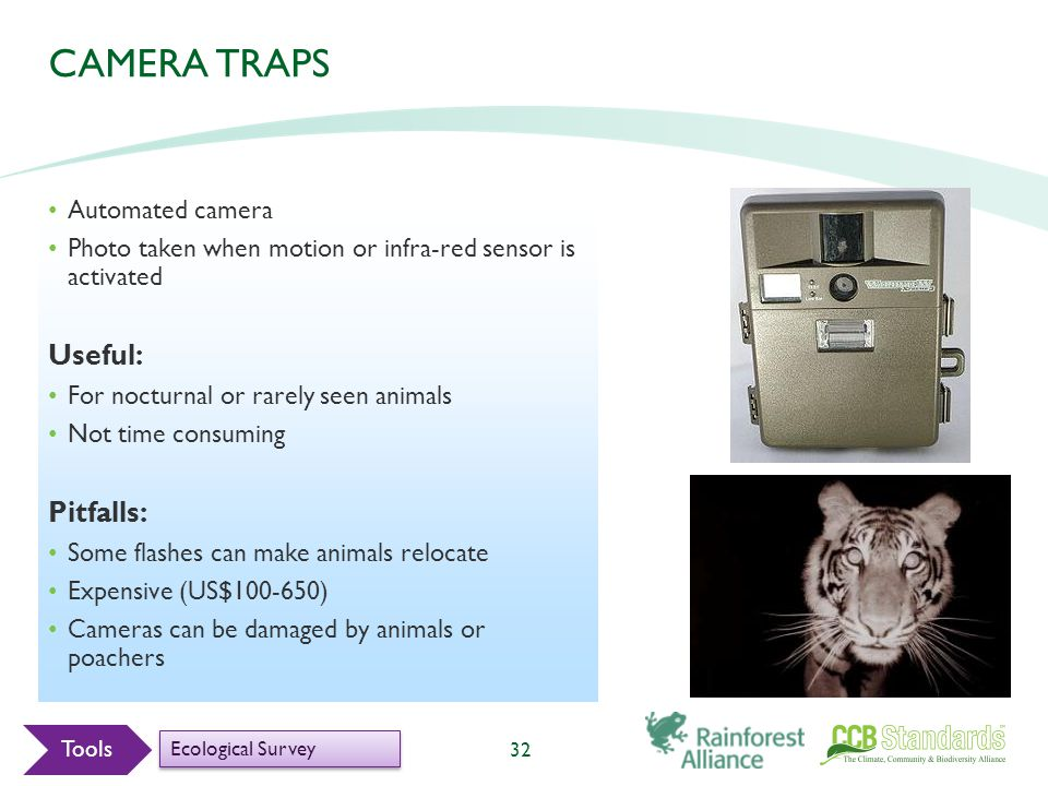 32 CAMERA TRAPS Automated camera Photo taken when motion or infra-red sensor is activated Useful: For nocturnal or rarely seen animals Not time consuming Pitfalls: Some flashes can make animals relocate Expensive (US$100-650) Cameras can be damaged by animals or poachers Tools Ecological Survey