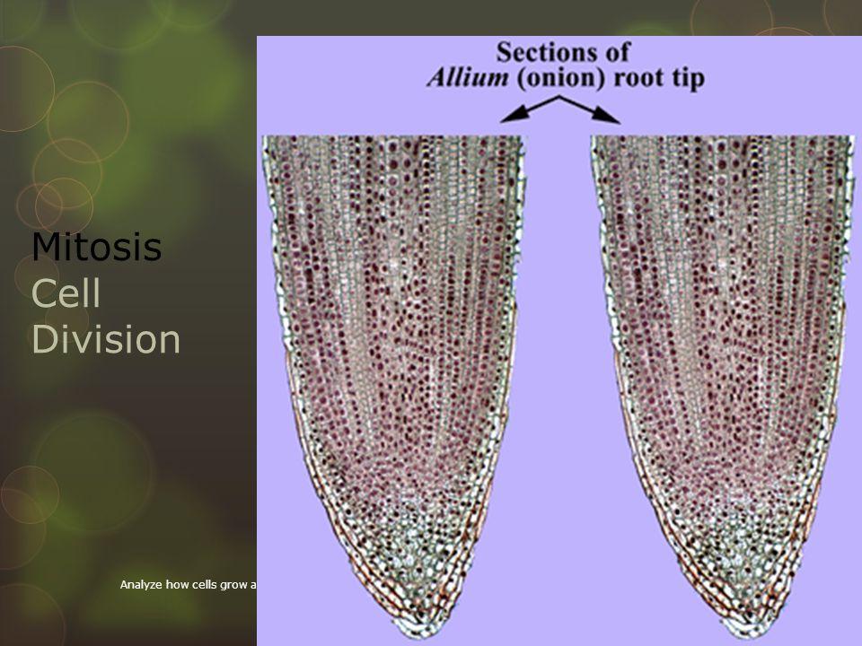 Mitosis Q: How do organisms Grow.