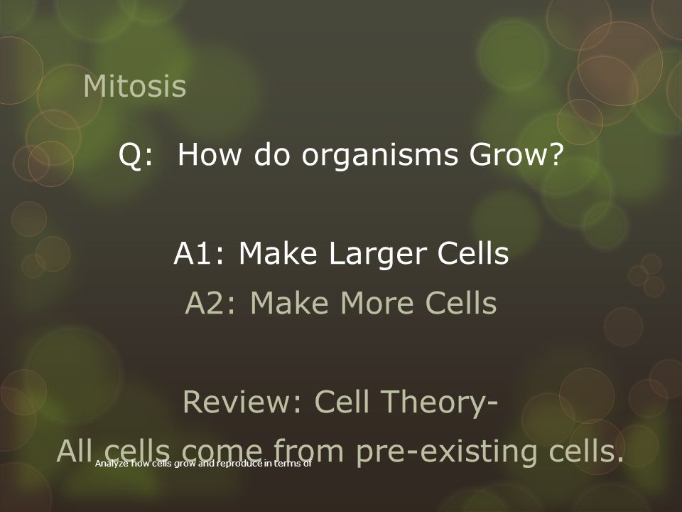 Mitosis  Your cells are dividing, growing, dying all the time.