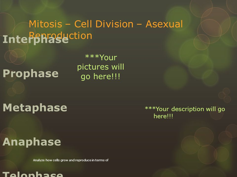 Cell Cycle is the sequence of stages through which a cell passes between one cell division.