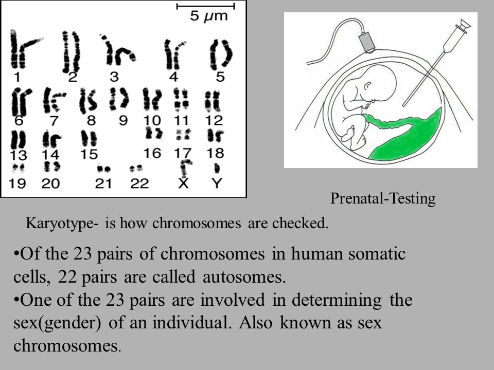 Of the 23 pairs of chromosomes in human somatic cells, 22 pairs are called autosomes.