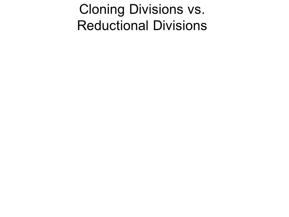 Cloning Divisions vs. Reductional Divisions