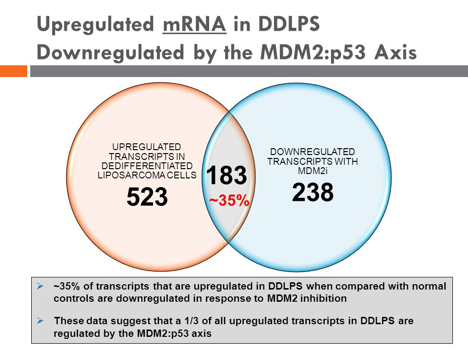Upregulated mRNA in DDLPS Downregulated by the MDM2:p53 Axis UPREGULATED TRANSCRIPTS IN DEDIFFERENTIATED LIPOSARCOMA CELLS 523 DOWNREGULATED TRANSCRIPTS WITH MDM2i 238 183  ~35% of transcripts that are upregulated in DDLPS when compared with normal controls are downregulated in response to MDM2 inhibition  These data suggest that a 1/3 of all upregulated transcripts in DDLPS are regulated by the MDM2:p53 axis ~35%