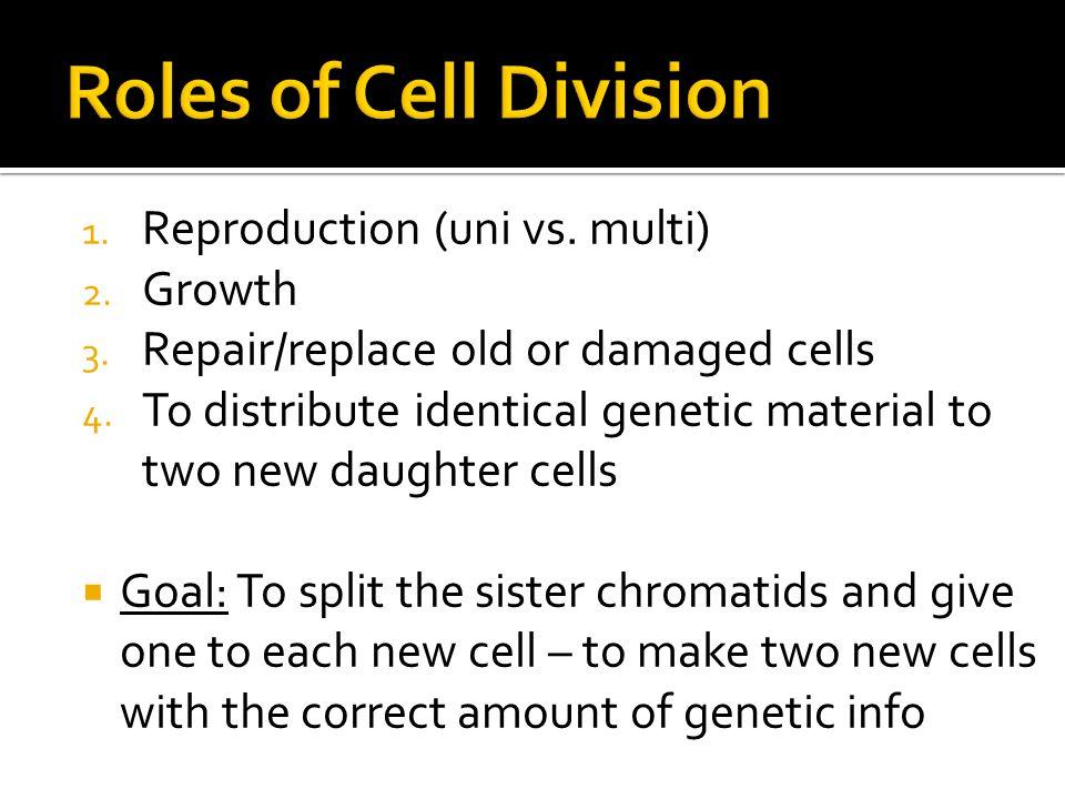 Mitosis 1.Mitosis - division of replicated chromosomes Cytokinesis 2.