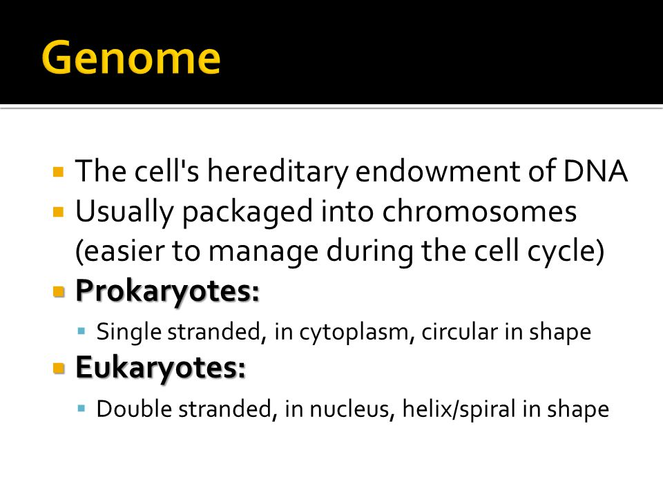 chromatin  Made of a DNA and protein complex called chromatin  During cell division, the chromatin becomes highly condensed into the chromosomes  # of chromosomes:  Sex cell (haploid cell) ▪ 23 (no pairs)—only contains one set of chromosomes  Somatic cell (diploid cell) ▪ 46 (in 23 pairs)—contain two sets of chromosomes